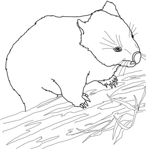 471x480 Australian Wombat Coloring Page Free Printable Coloring Pages