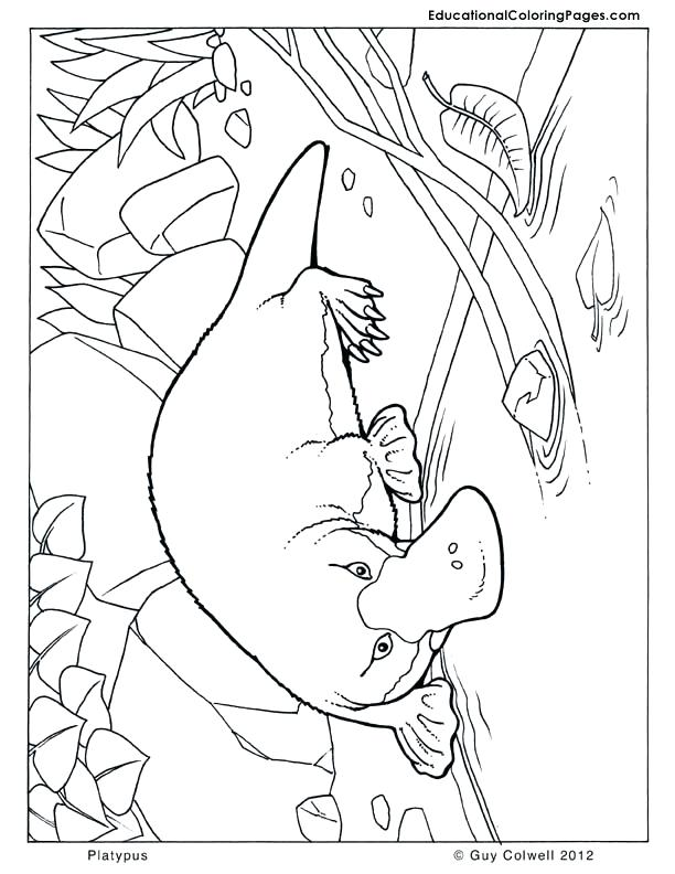 612x792 Australia Coloring Pages Platypus Coloring Animal Coloring Pages
