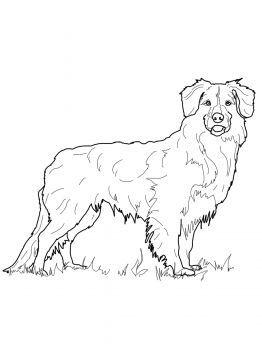 262x350 Australian Shepherd Coloring Pages