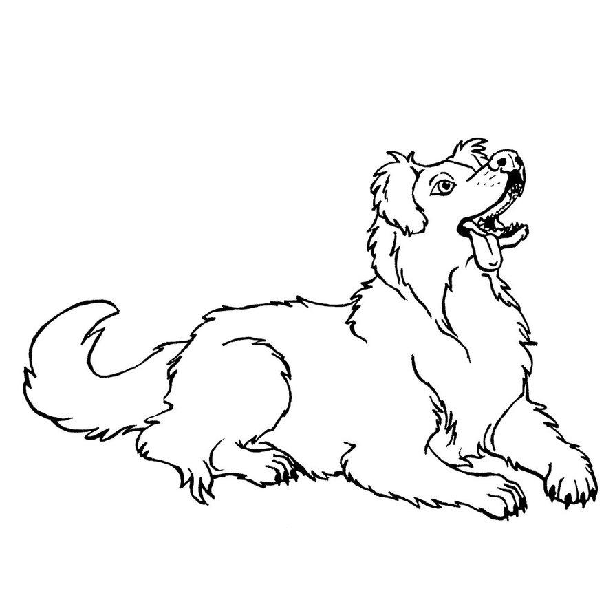 894x894 Australian Shepherd Lineart By Xiphosuras