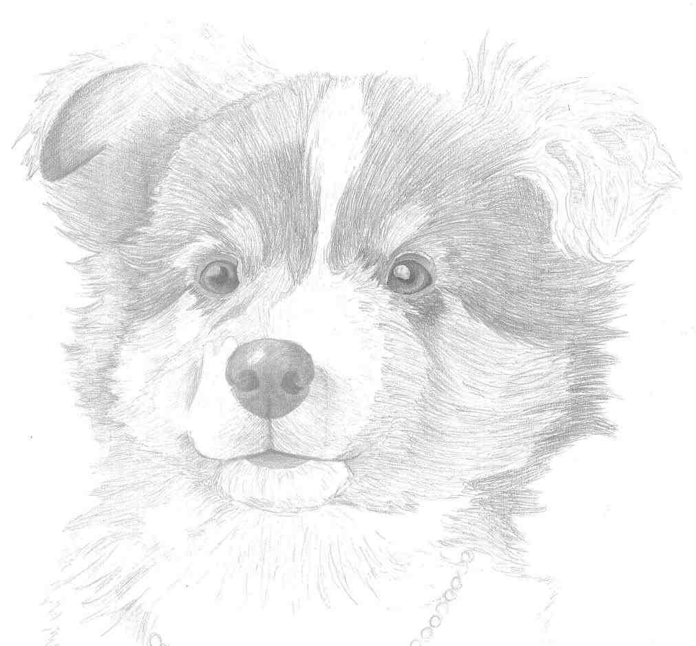 1011x938 Coloring Page Free Printable Pages Shepherd Clipart Head Drawing