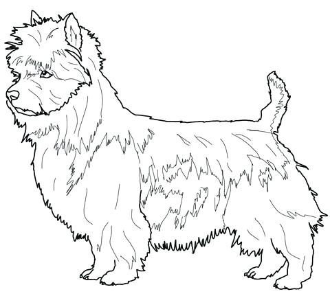480x431 Good Australian Shepherd Coloring Pages Free Download Bull Terrier