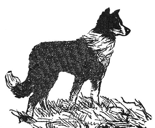 596x493 National English Shepherd Rescue English Shepherd Dog Rescue Group
