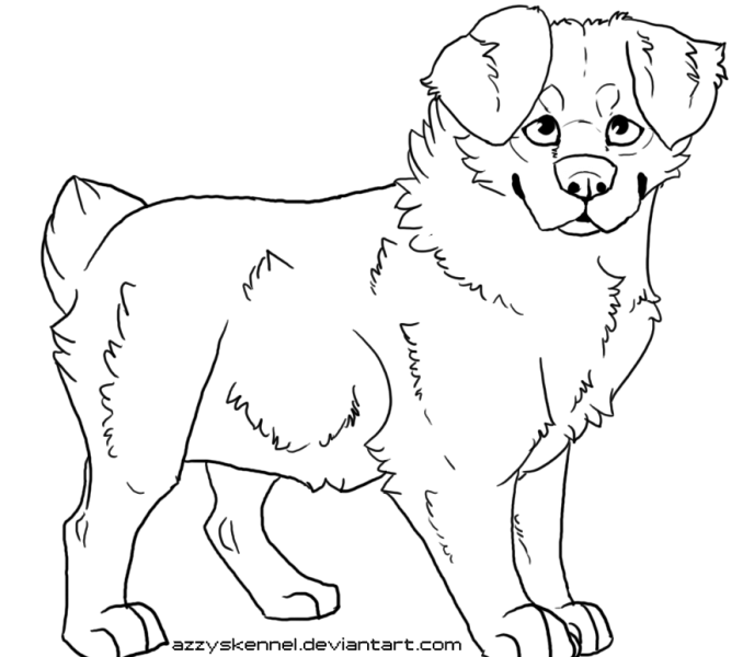 Australian Shepherd Drawing at GetDrawings.com | Free for personal ...