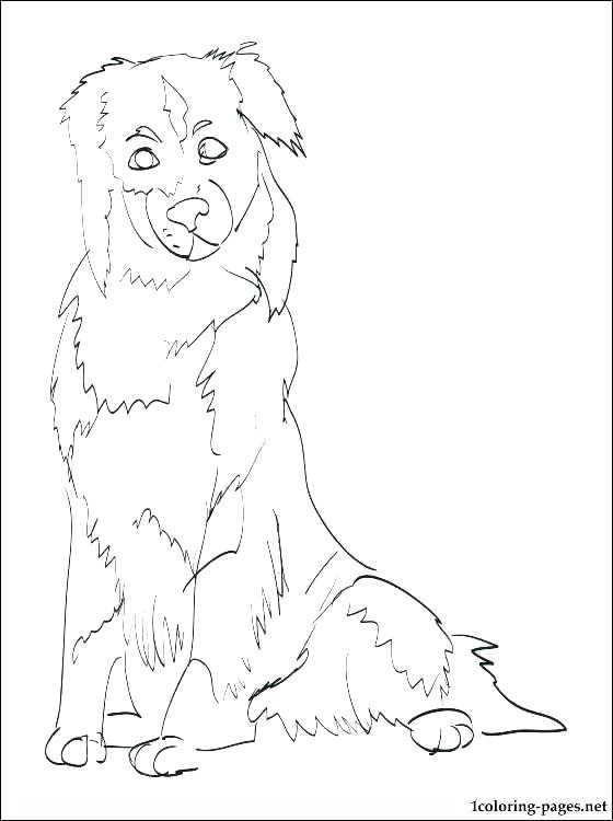 560x750 Shepherd Coloring Pages