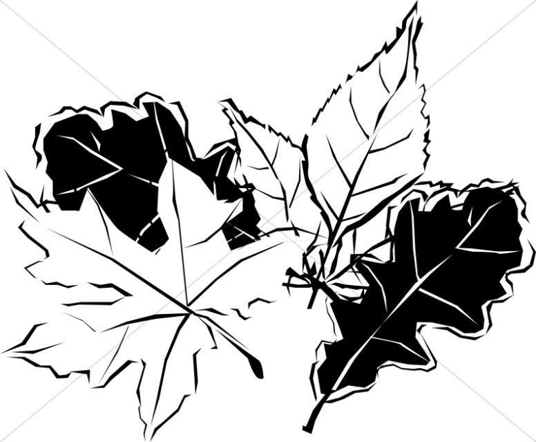 776x639 Black And White Autumn Leaves Nature Clipart