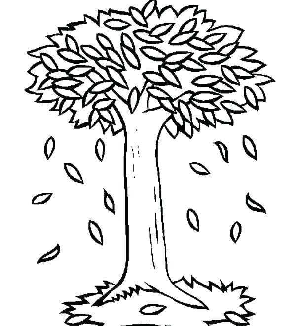 600x660 Fall Leaves Coloring Pages For Kindergarten Oak Leaf Page Autumn