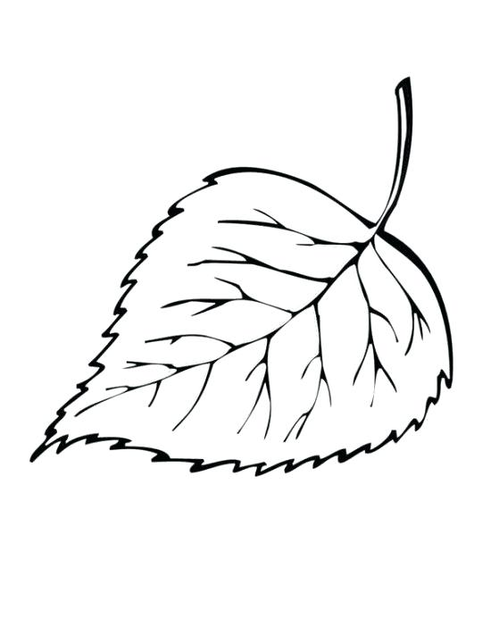 550x711 Leaf Coloring Fall Maple Leaf Coloring Page Palm Leaf Coloring