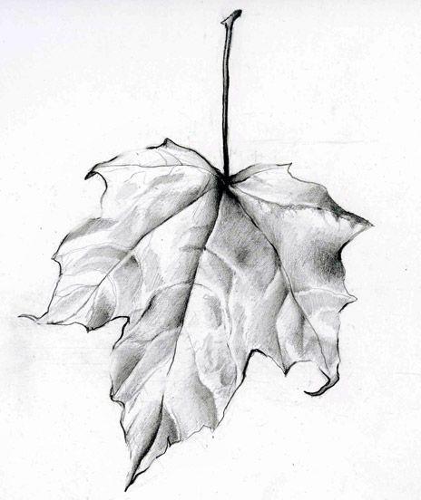 464x552 Leaf Drawing