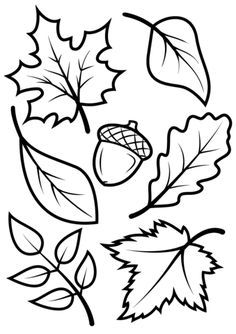 236x334 Learn How To Draw A Leaf, One Of The Maple Variety
