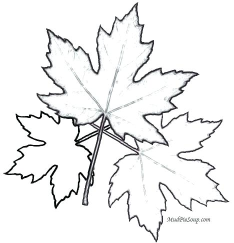 468x486 Leaves Coloring Pages Printable Free Printable Leaf Coloring Pages