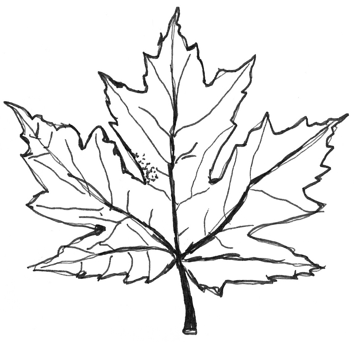 Autumn leaf drawing at free for personal for Maple leaf coloring page