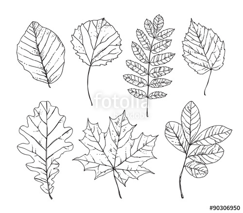 500x439 Sketch Leaves Hand Drawn. Autumn Leaves, Trees, Plants, Nature