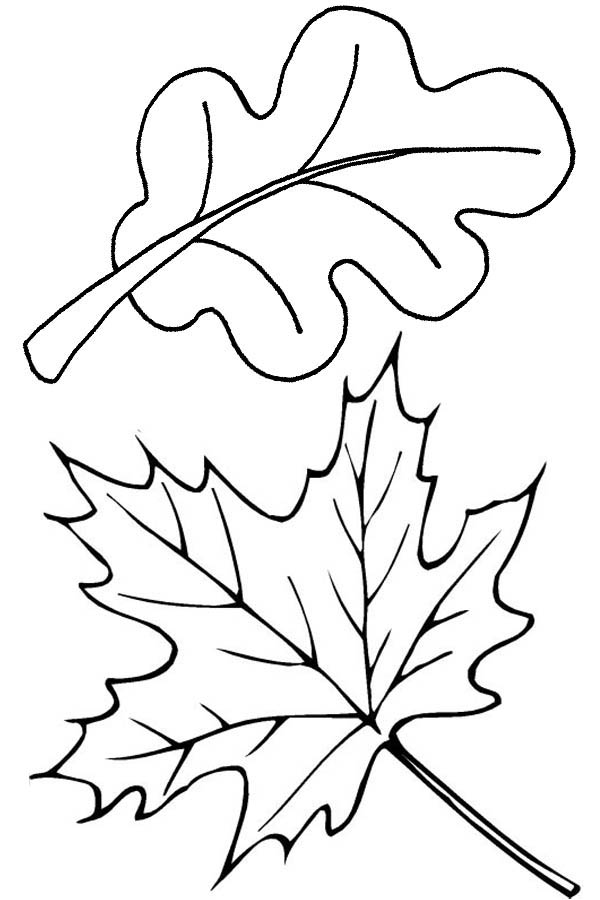 600x900 Autumn Leaves In Autumn Coloring Page Color Luna