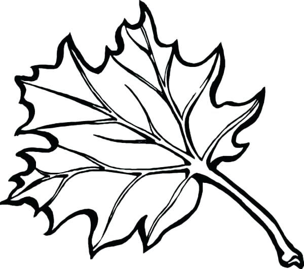 600x531 Autumn Leaf Coloring Pages Autumn Leaves Coloring Pages Preschool