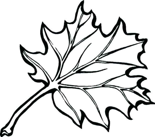 618x547 Fall Leaves Coloring Page Autumn Leaves Coloring Page Fall Leaves