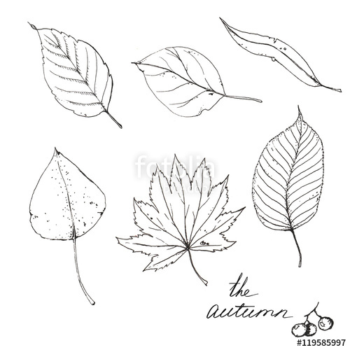 500x500 Hand Drawn Line Art. Sketches Of Different Autumn Leaves Isolated