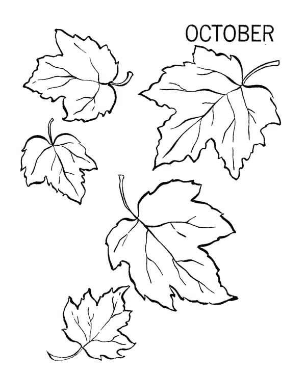 600x734 Leaf Color Pages Autumn Leaves Coloring Pages Printable Autumn