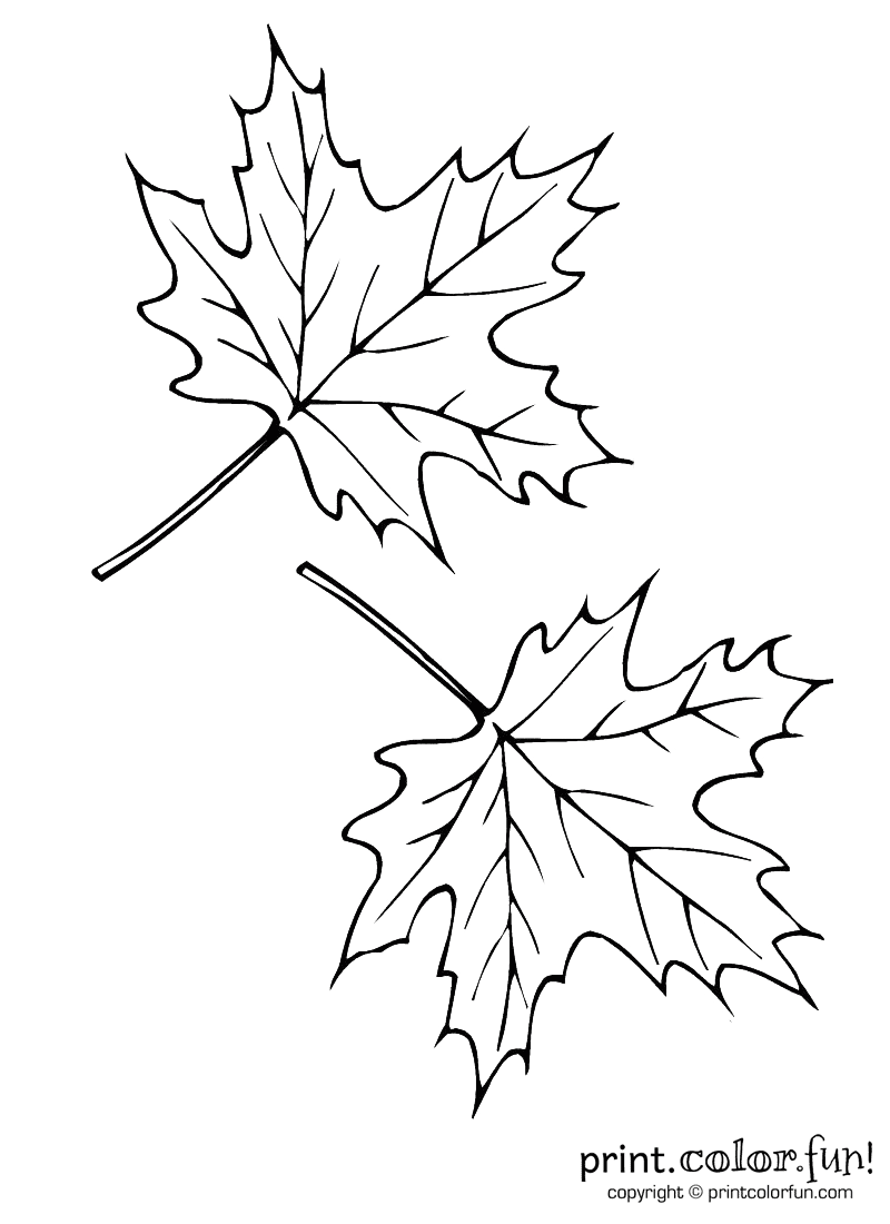 800x1100 Two Autumn Leaves Coloring Page