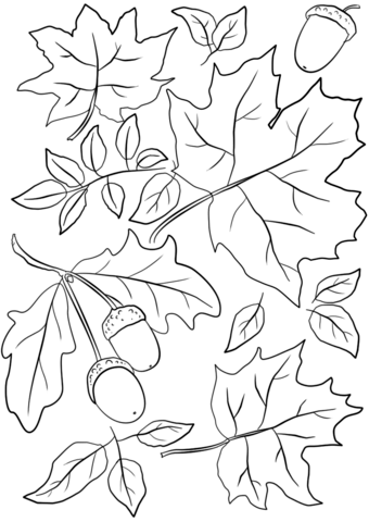 340x480 Autumn Leaves And Acorns Coloring Page Free Printable Coloring Pages