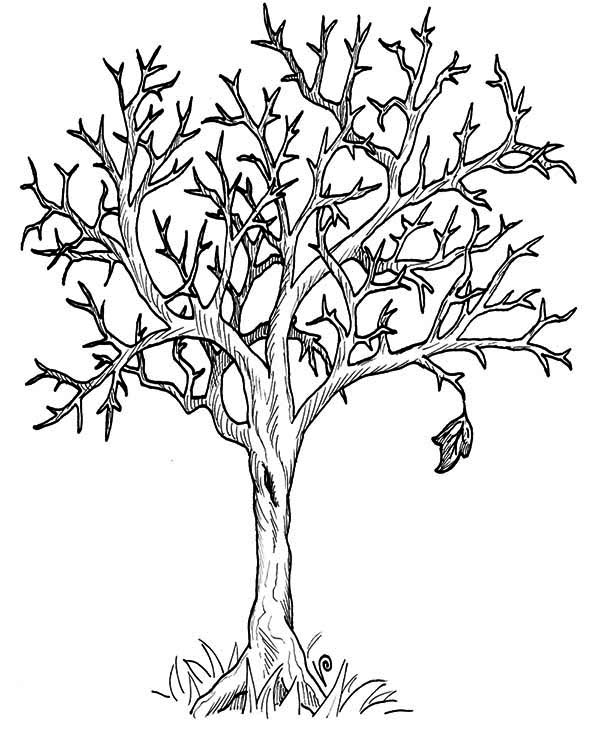 600x741 Autumn Tree Without Leaves In Fall Leaf Coloring Page Color Luna