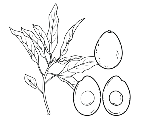 480x411 Avocado Branch, Whole Avocado And Cross Section Coloring Page
