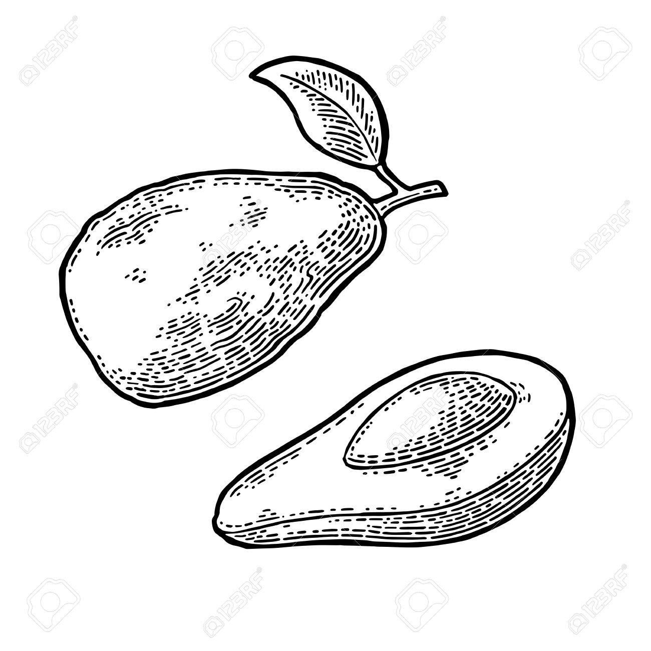 1300x1300 Half Avocado With Seed. Vector Vintage Engraving Color Royalty