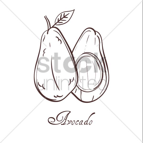 600x600 Avocado Vector Image