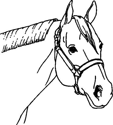 432x476 Halter Horse Drawing And Award
