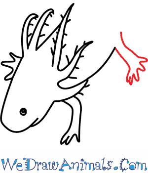 300x350 How To Draw An Axolotl