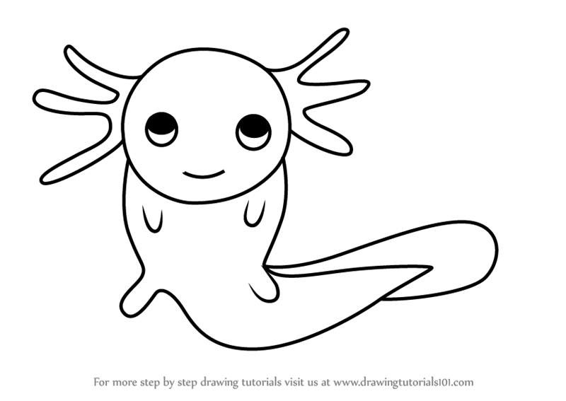 800x567 Learn How To Draw An Axolotl For Kids (Animals For Kids) Step By