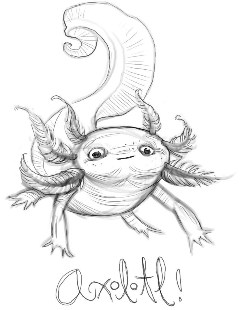832x1072 Mega Sketchies Axolotl!