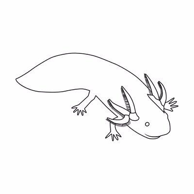 400x400 The Artful Axolotl (@artfulaxolotl) Twitter