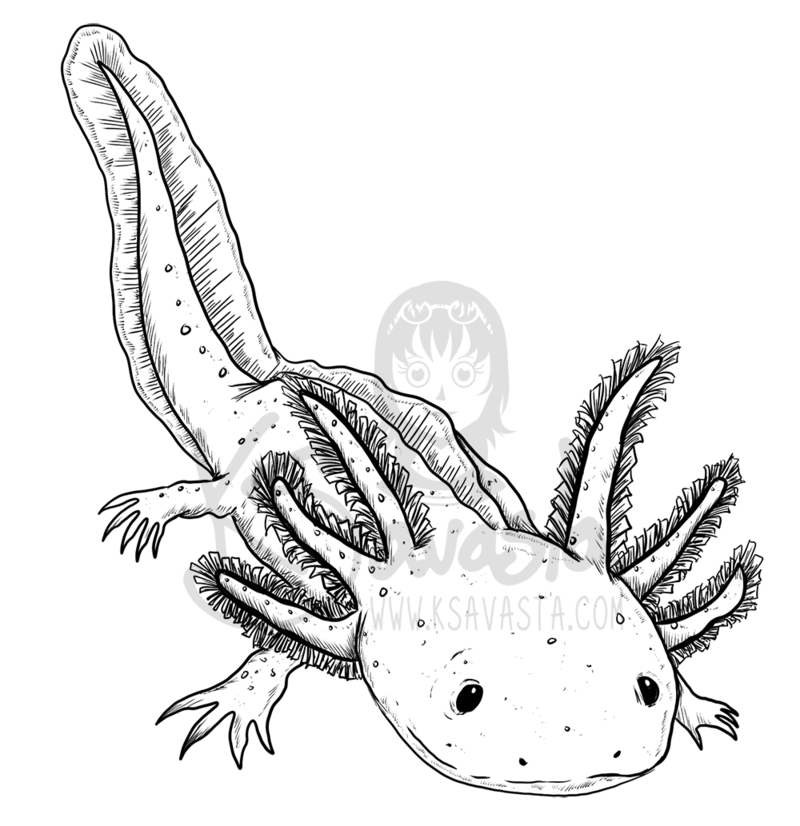axolotl coloring pages - photo#14