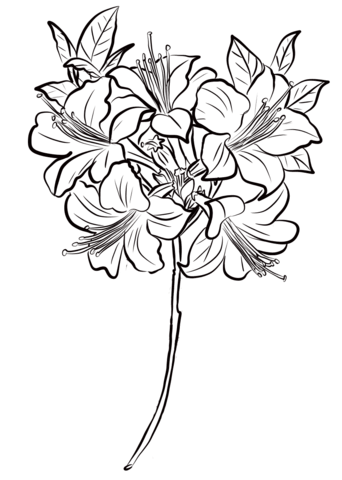 342x480 Azalea Coloring Page Free Printable Coloring Pages