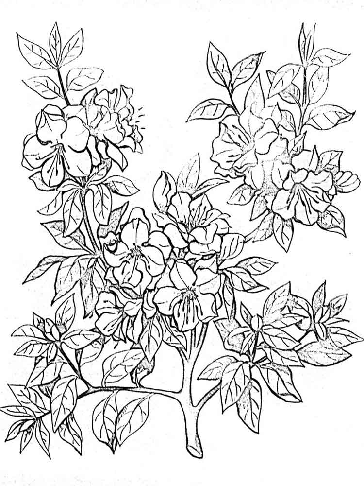 750x1000 Azalea Coloring Pages. Download And Print Azalea Coloring Pages