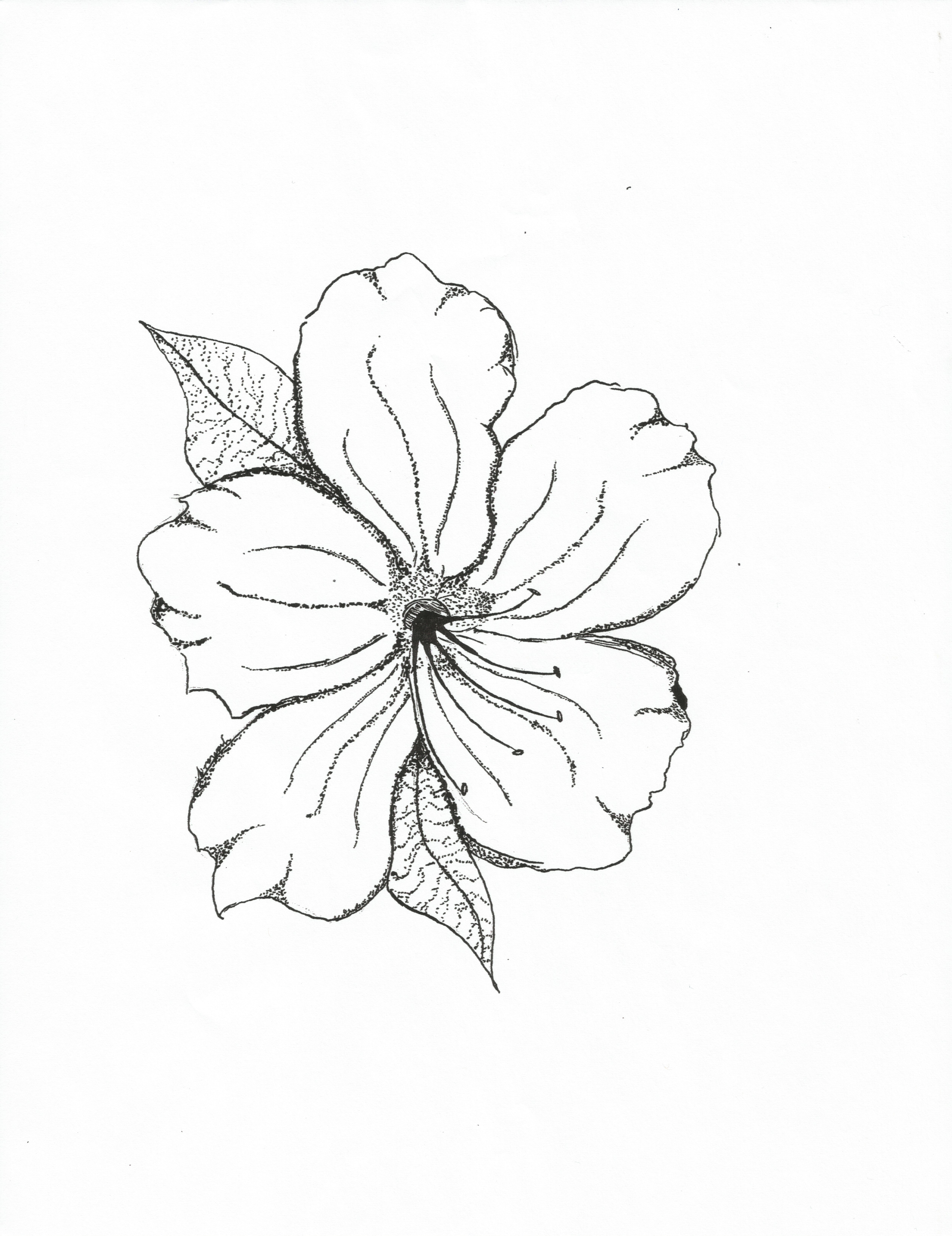 5040x6540 Flower How To Draw For Kids Relieving Kids To Print Color And Free