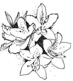 236x262 Images For Gt Azalea Flower Drawing Gettin' Ink Done