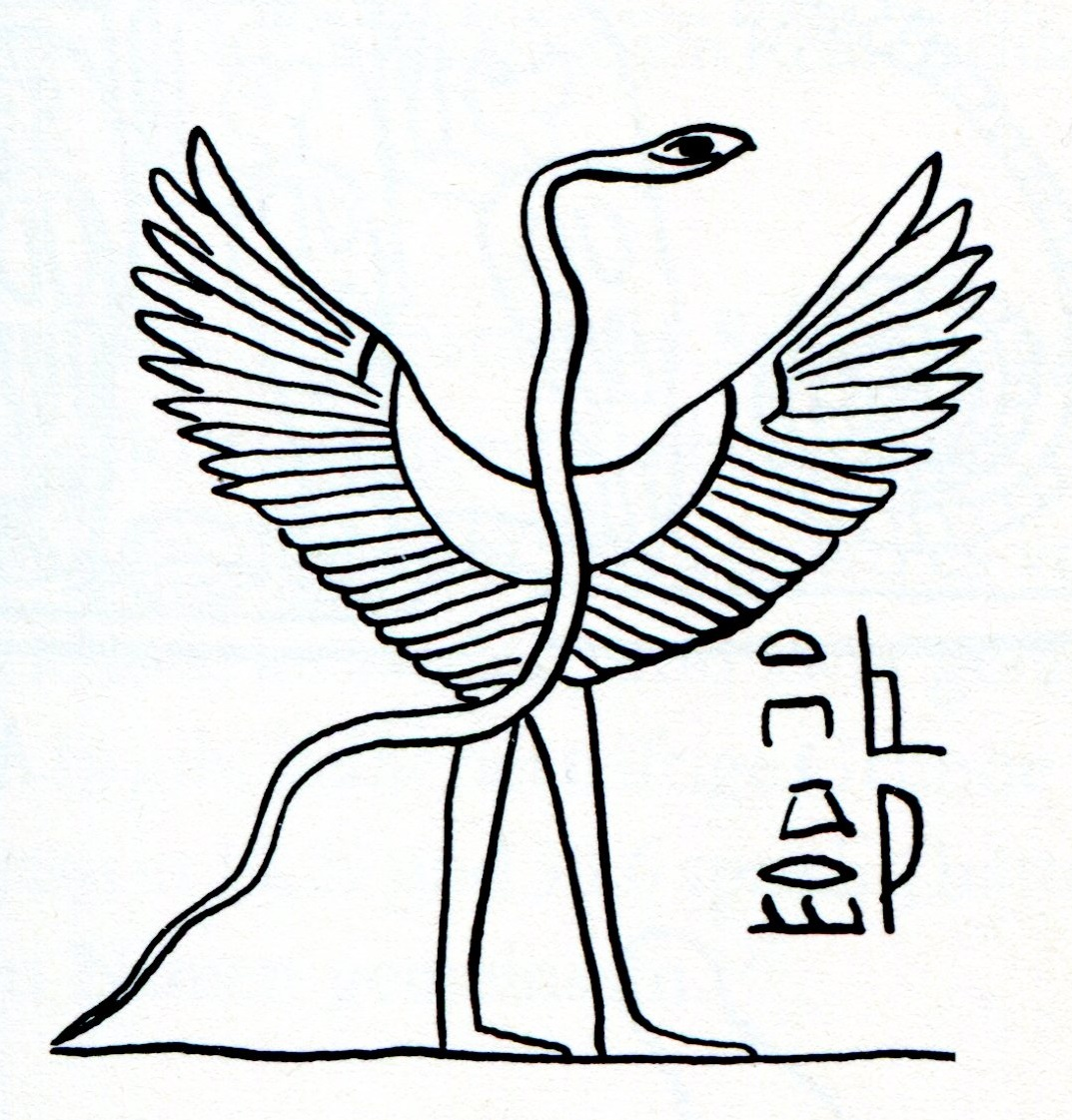 1073x1121 Ancient Pterosaur Depictions Genesis Park