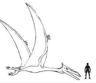 326x281 Quetzalcoatlus