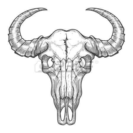 450x450 Vintage Buffalo Skull Vector Sketch. Bull Animal Head Bones