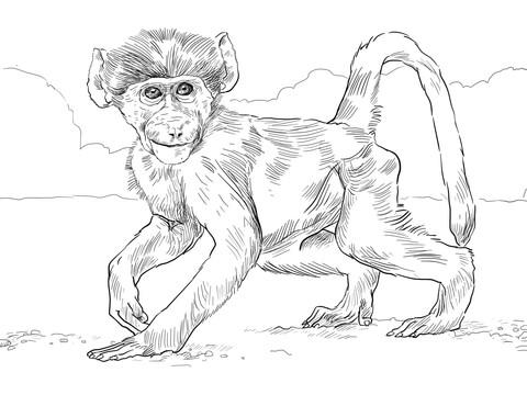 Baboon Drawing At Getdrawings Com