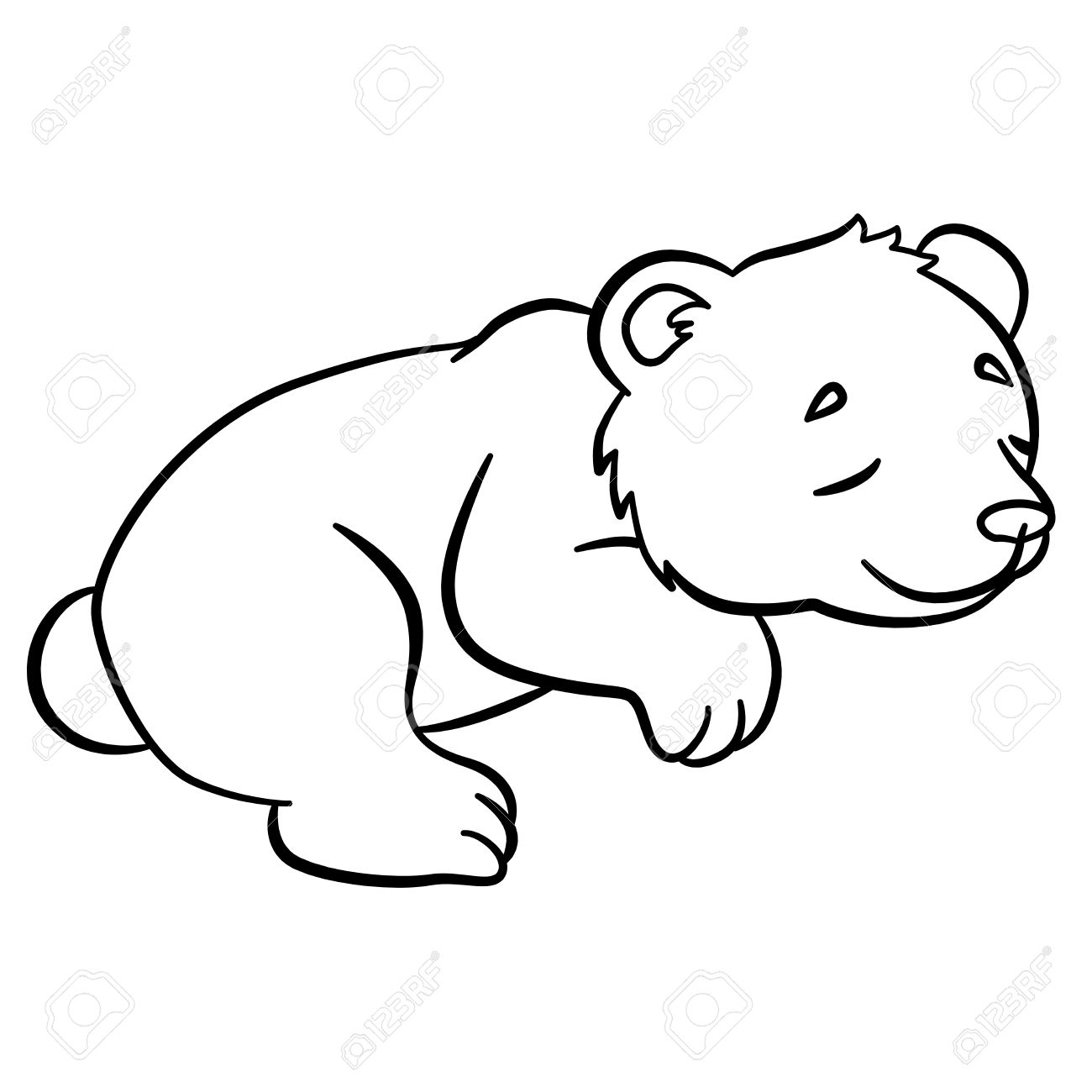 1300x1300 Coloring Pages. Wild Animals. Little Cute Baby Bear Sleeps. It