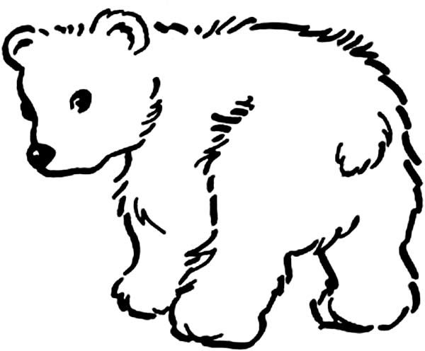 600x496 Baby Bear Drawing Coloring Pages Coloring Pages Kids