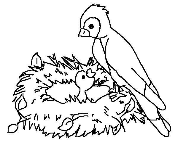 600x500 Mother Of Bird Feeding Her Baby Coloring Page Color Luna