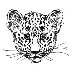 Baby Cheetah Drawing At Getdrawings Com Free For Personal Use Baby