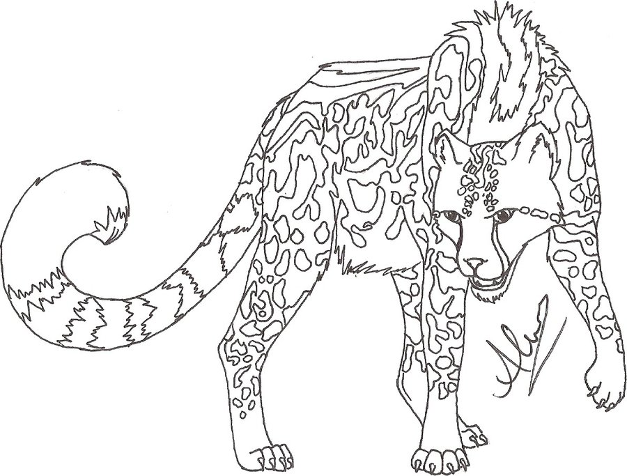 900x683 King Cheetah FOR SALE By Blackcatrayne666 On DeviantArt
