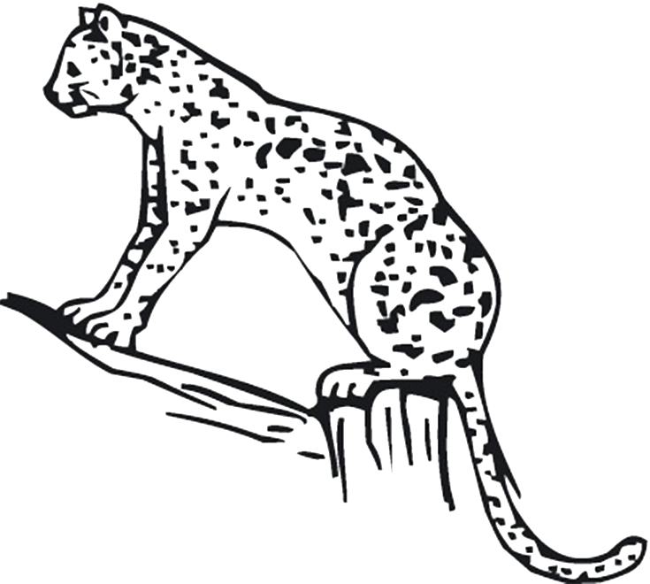 925x732 Baby Cheetah Coloring Pages 735x660 Pics571151