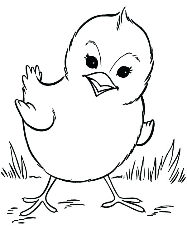 Baby Chicken Drawing at GetDrawings.com | Free for personal use Baby ...
