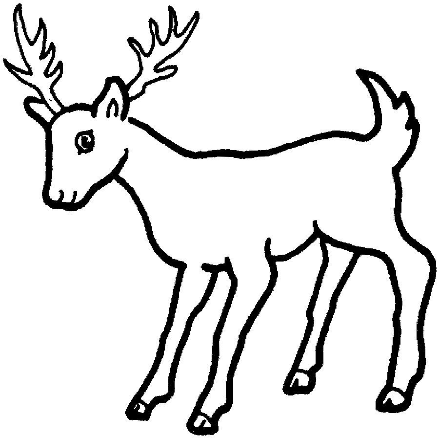 900x896 Coloring Pages Deer Of Archives Best Page Drawing